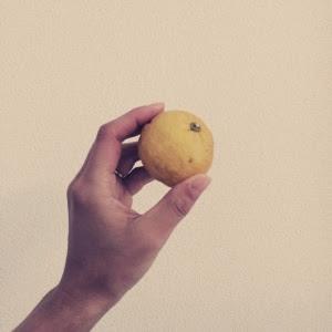 【冬至に柚子湯に入る理由】壮大なる融通、ゆずの話。