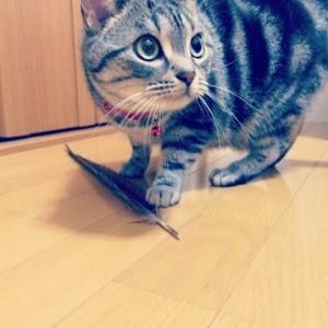 お金のかからない、うちの猫が大興奮するおもちゃ。