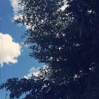 竹やぶ 空