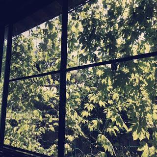 【夏のインテリア】主人の実家孝行、ゴーヤの緑のカーテンがものすごく喜ばれていた話。