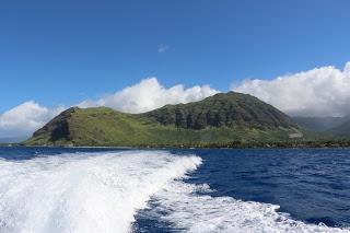 ハワイ イルカツアー