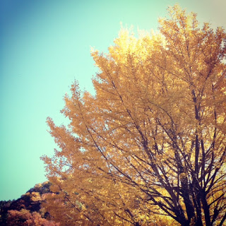 【東京紅葉名所】昭和記念公園&高尾山で紅葉狩りを楽しむ。