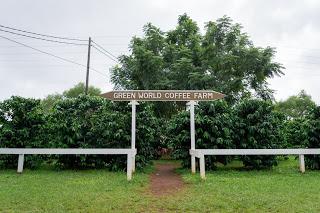 ハワイ グリーンワールドコーヒー 農園