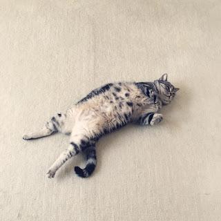 猫 シャバーサナ