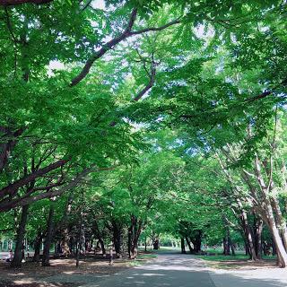 円山公園 札幌