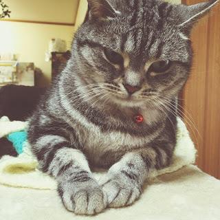 猫 座布団 手作り