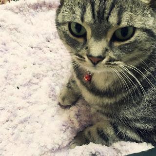 【編み物瞑想】猫の座布団を手作りしてみた。
