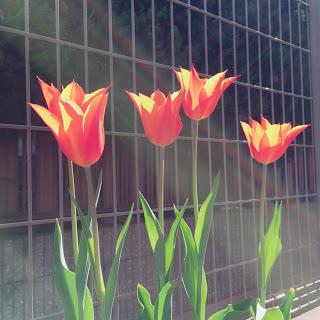 ミニマリズムの花と腹と土と。