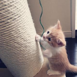 【猫とインテリア】テレビの裏のコード類を収納。