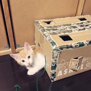 【猫のおもちゃ】仔猫に好評、手作りのダンボールハウス。