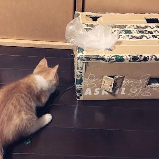 猫 段ボール ハウス 手作り