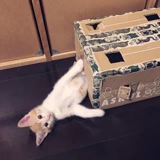 手作り 段ボール 猫ハウス