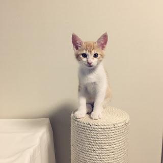 【猫と暮らすインテリア】用意した爪とぎと許したもの。