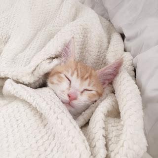 【猫アレルギー対策】マキタの掃除機にあう布団用ノズル。