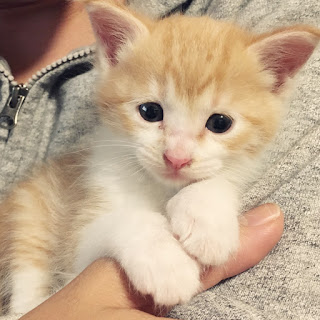 【猫のお手入れグッズ】ブラッシングと爪切り編。