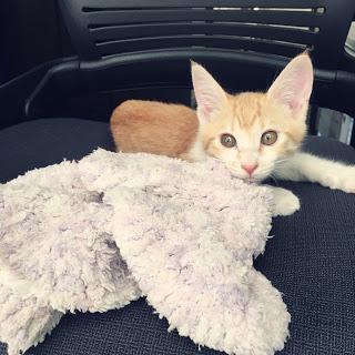 【ブランケット・キャッツ】猫とお気に入り毛布