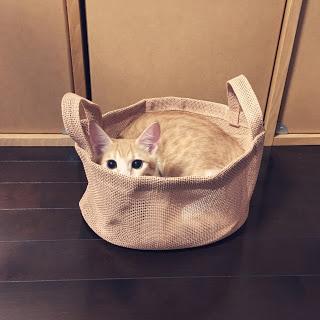 【猫日記】猫がカゴや箱に入りたがる本当の理由。