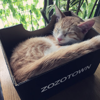 猫が箱に入る理由