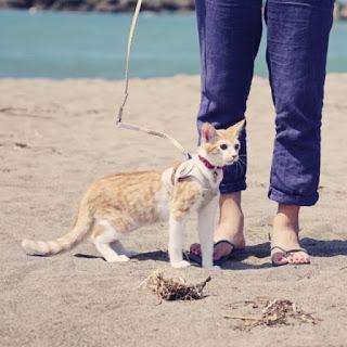 【猫と帰省】はじめてのロングドライブ、持ち物と心がまえ。