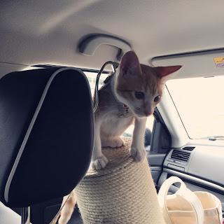 猫 車 ドライブ