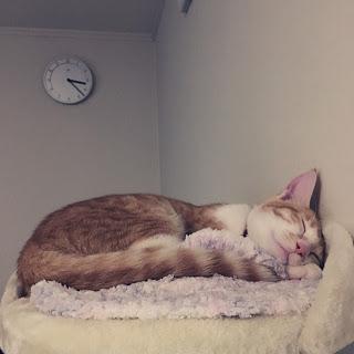 【猫と暮らすインテリア】スリム&シンプルなキャットタワー。