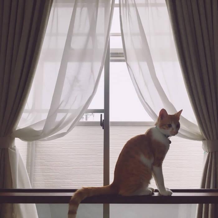 窓そうじと秋のネコ。