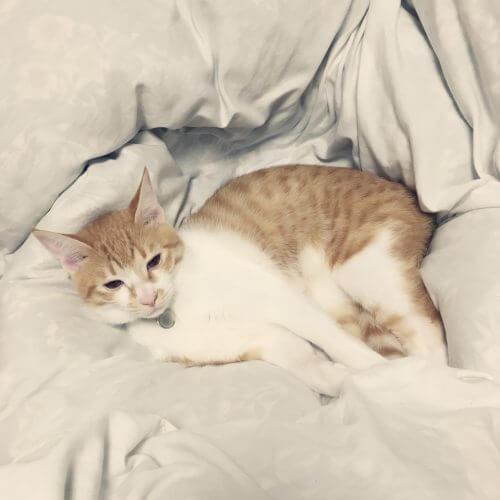我が家の湯たんぽと猫たんぽ。
