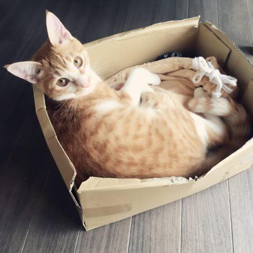 猫 湯たんぽ
