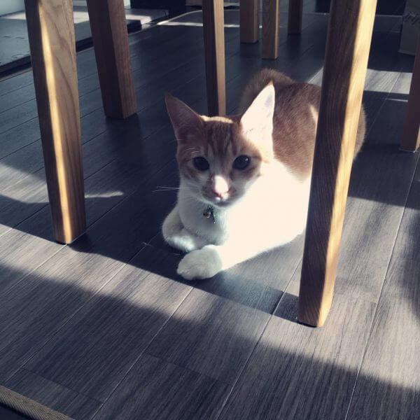 猫 パストリーゼ