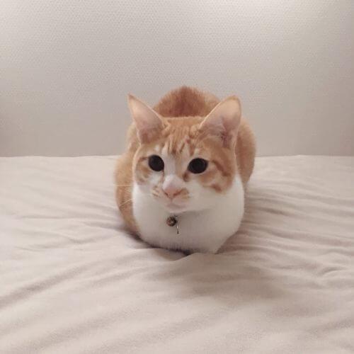 猫バンバンの季節がやってきた。