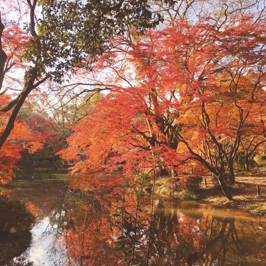 紅葉に現れた美の神さま。