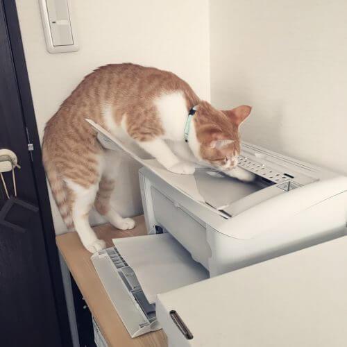猫の手も借りたい12月、アシスタントを雇いました。
