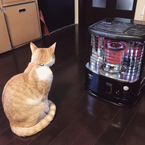 猫 石油ストーブ
