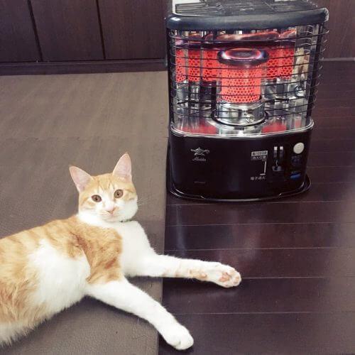 猫と石油ストーブの安全対策。