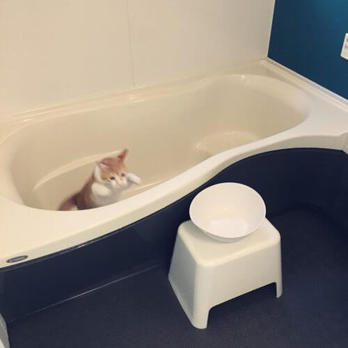 酸素系漂白剤を使って風呂釜洗浄をやってみた。