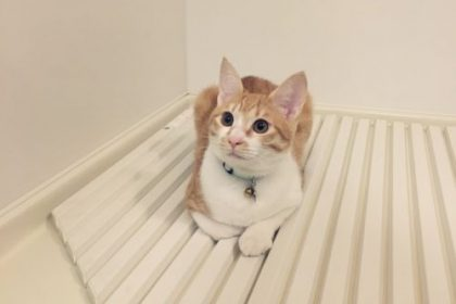 お風呂 猫