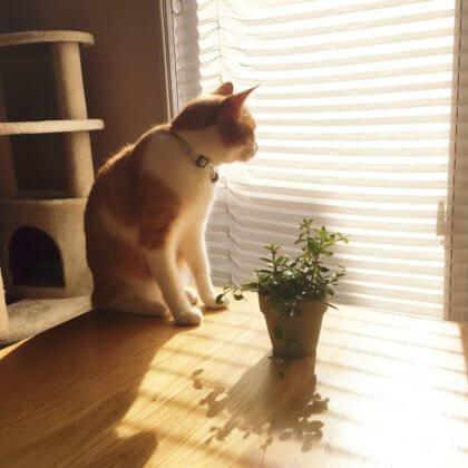 日光浴 猫