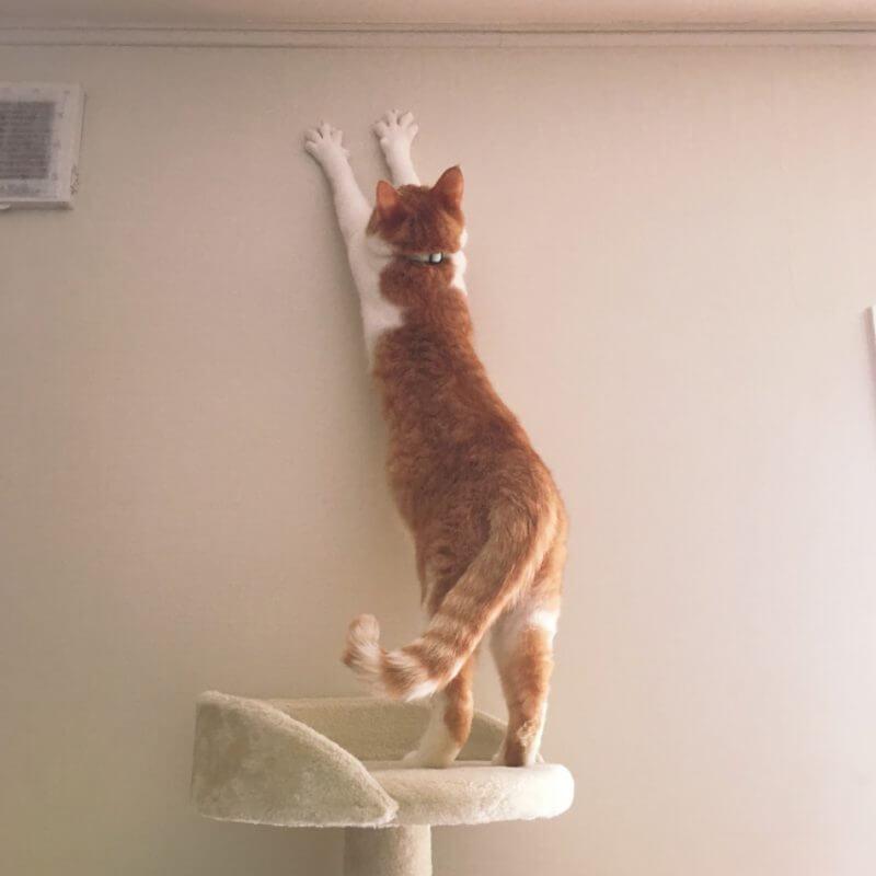 猫 壁 伸び