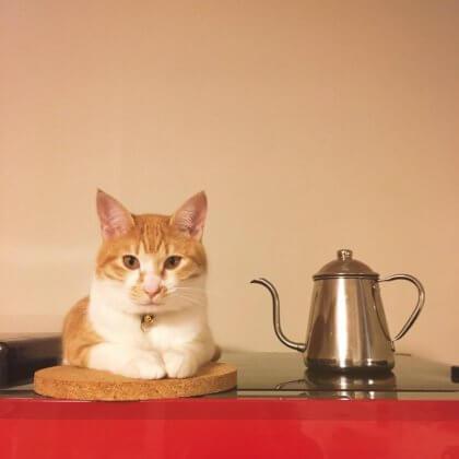 猫 冷蔵庫の上
