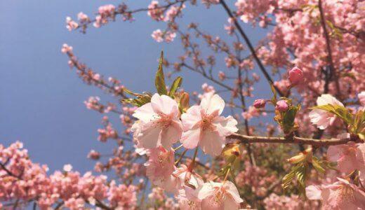 春のおたよりお届けします。