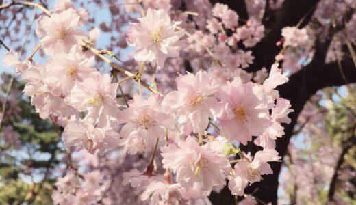 春は断捨離。