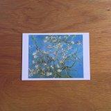 花咲くアーモンドの木の枝 ポストカード