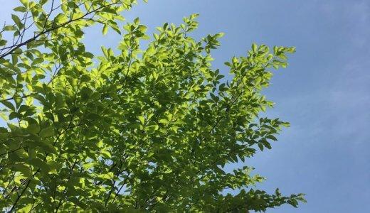 【ヨガクラスのお知らせ】初夏の体ほぐしと暮らし方