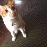 猫 ヨガマット