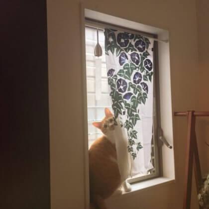 出窓 手ぬぐい 風鈴