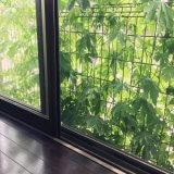 ゴーヤ 緑のカーテン