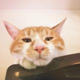 猫の鼻 触る