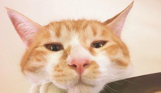 猫の鼻をなでる、というサマディ。