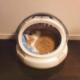 猫がトイレに何度も行くのに、何も出てない。頻尿?膀胱炎?早めに病院へ。