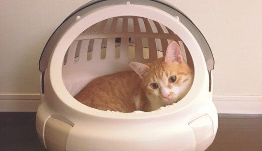 そのままキャリーにもなる猫ベッド【コロルおでかけネコベッド】